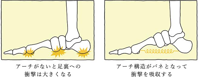 アーチがないと足裏への衝撃は大きくなる アーチ構造がバネとなって衝撃を吸収する