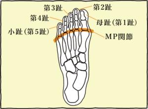 第1趾〜第5趾の図
