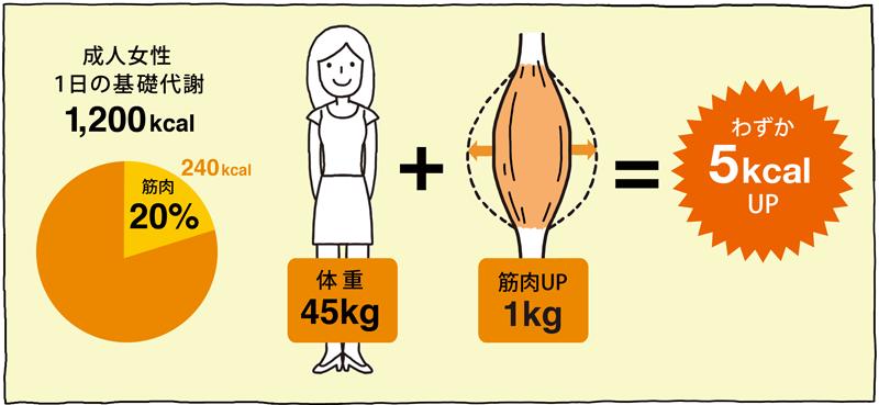 成人女性1日の基礎代謝1,200kcal 体重45kg+筋肉アップ1kg=わずか5kcalアップ