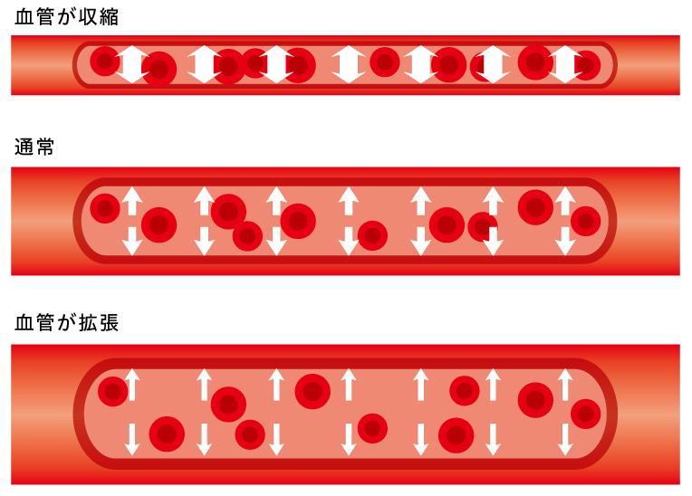 血管の収縮・拡張